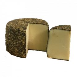 Sicilian black cheese in straw