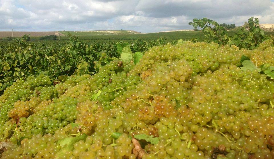 Vendita online vini siciliani cantina funaro spedizione in tutto il mondo